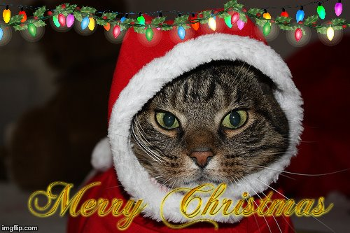 Christmas Memes Cats.Cats Merry Christmas Cat Memes Gifs Imgflip