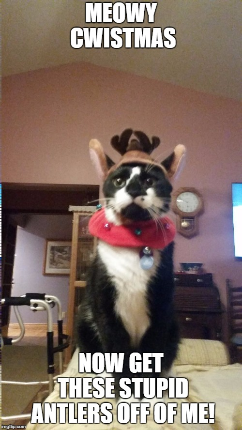 Cat hates Christmas costume | MEOWY CWISTMAS NOW GET THESE STUPID ANTLERS OFF OF ME! | image tagged in christmas,cat,kitty,happy holidays | made w/ Imgflip meme maker