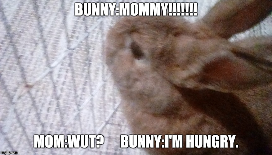 BUNNY:MOMMY!!!!!!! MOM:WUT?      BUNNY:I'M HUNGRY. | image tagged in bunny | made w/ Imgflip meme maker