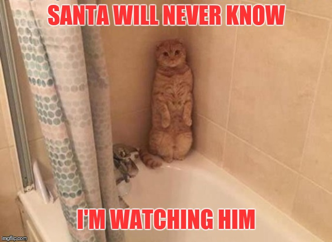 Sneaky Cat | SANTA WILL NEVER KNOW I'M WATCHING HIM | image tagged in memes,santa claus,christmas,hiding,merry christmas,cats | made w/ Imgflip meme maker