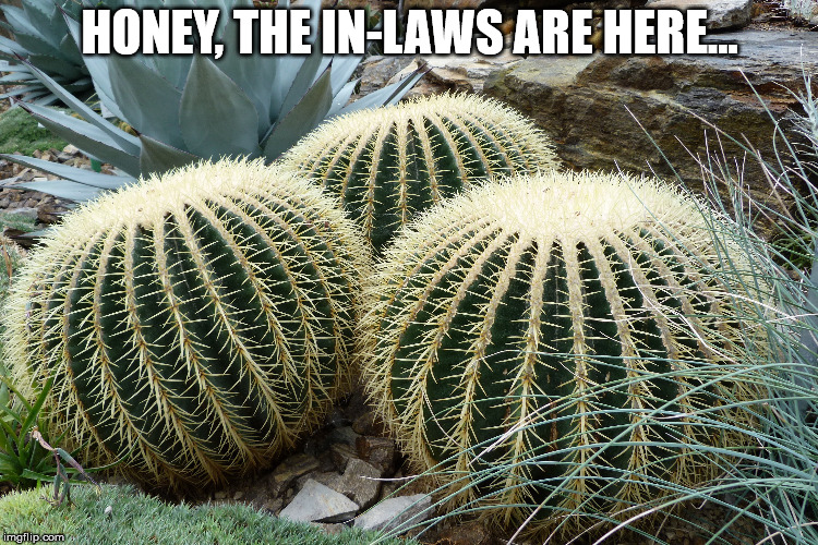 When the in-laws come over... | HONEY, THE IN-LAWS ARE HERE... | image tagged in mother in law,grumpy,unwanted house guest,family,lmao,headache | made w/ Imgflip meme maker