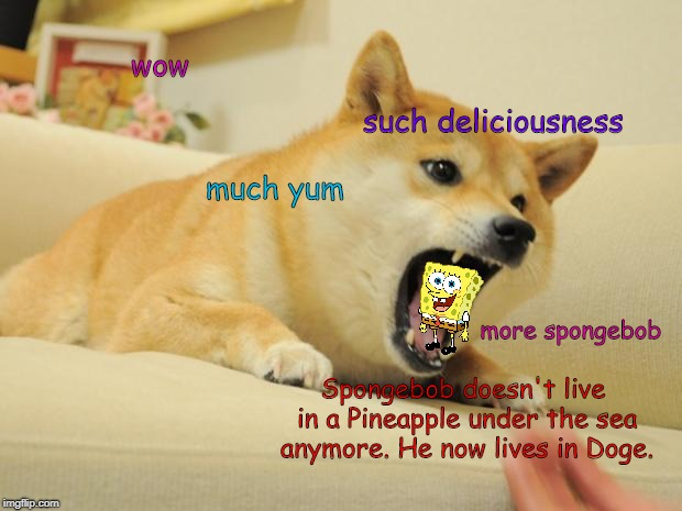 ANGRY DOGE | wow such deliciousness much yum more spongebob Spongebob doesn't live in a Pineapple under the sea anymore. He now lives in Doge. | image tagged in angry doge,spongebob | made w/ Imgflip meme maker