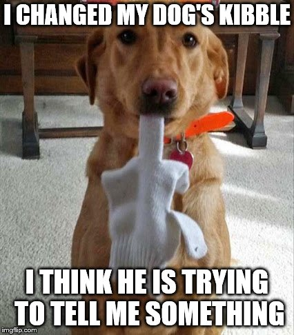 Smart Doggie | I CHANGED MY DOG'S KIBBLE I THINK HE IS TRYING TO TELL ME SOMETHING | image tagged in middle finger,dog,cute dog,smart,roll safe think about it,funny meme | made w/ Imgflip meme maker