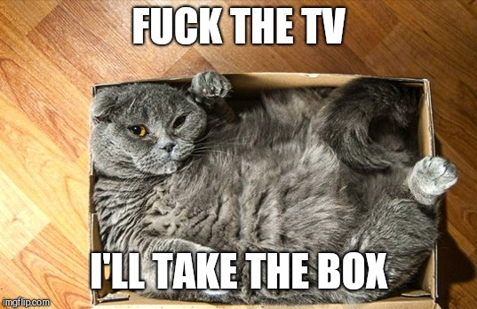 cat in a box | F**K THE TV I'LL TAKE THE BOX | image tagged in cat in a box | made w/ Imgflip meme maker