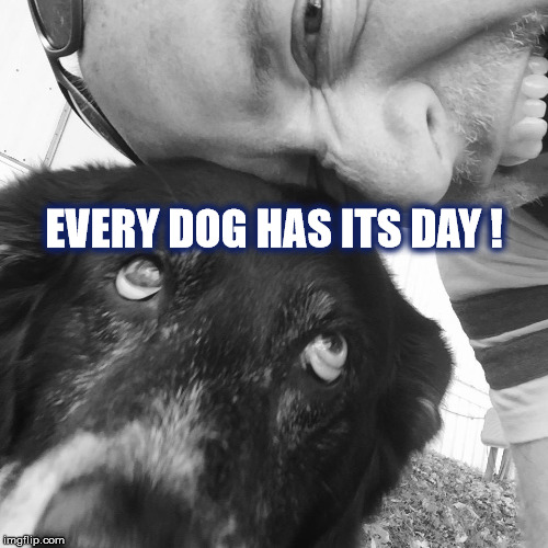 DMB What Would You Say | EVERY DOG HAS ITS DAY ! | image tagged in dmb,dave matthews band,what would you say,dog,every dog has its day | made w/ Imgflip meme maker