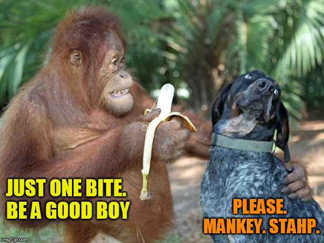 JUST ONE BITE. BE A GOOD BOY PLEASE. MANKEY. STAHP. | made w/ Imgflip meme maker