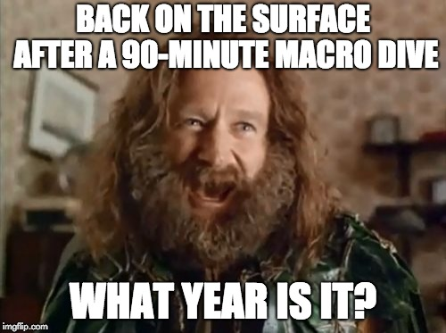 What Year Is It Meme | BACK ON THE SURFACE AFTER A 90-MINUTE MACRO DIVE WHAT YEAR IS IT? | image tagged in memes,what year is it | made w/ Imgflip meme maker