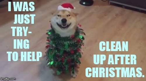 What? | I WAS   JUST TRY-   ING     TO HELP CLEAN UP AFTER CHRISTMAS. | image tagged in memes,dog,christmas lights,helping,clean up,cute | made w/ Imgflip meme maker