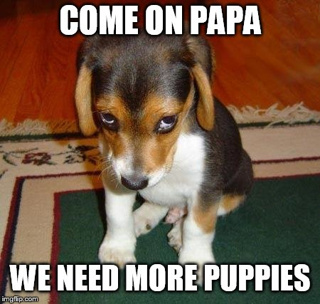 Sad puppy | COME ON PAPA WE NEED MORE PUPPIES | image tagged in sad puppy | made w/ Imgflip meme maker