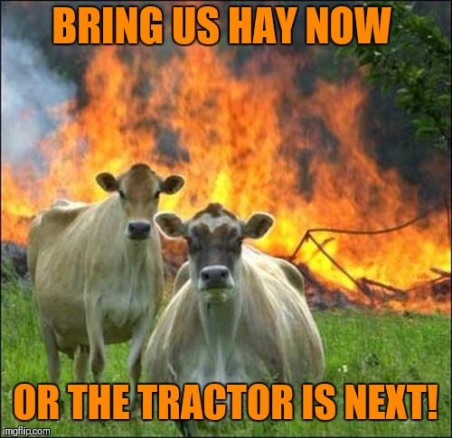 Evil Cows | BRING US HAY NOW OR THE TRACTOR IS NEXT! | image tagged in memes,evil cows,tractor,farm,beef,where's the beef | made w/ Imgflip meme maker