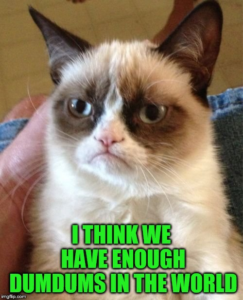 Grumpy Cat Meme | I THINK WE HAVE ENOUGH DUMDUMS IN THE WORLD | image tagged in memes,grumpy cat | made w/ Imgflip meme maker