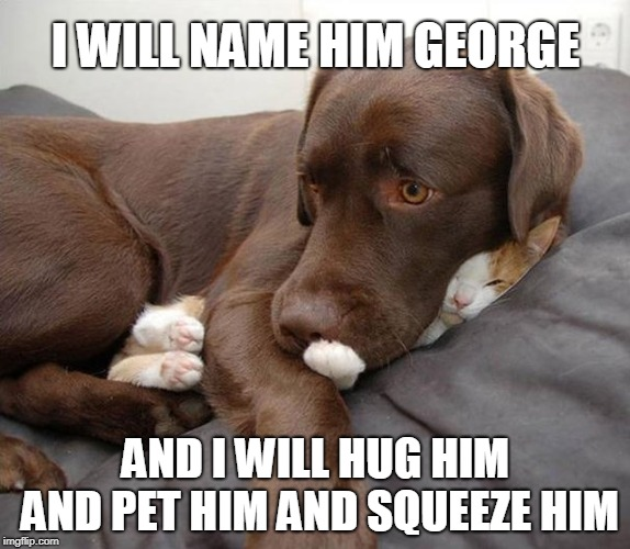 I Will Name Him George | I WILL NAME HIM GEORGE AND I WILL HUG HIM AND PET HIM AND SQUEEZE HIM | image tagged in name him george,funny dogs,scared cat,doge,dog vs cat | made w/ Imgflip meme maker