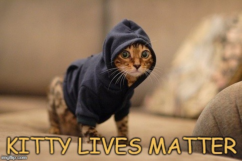 Hoody Cat Meme | KITTY LIVES MATTER | image tagged in memes,hoody cat | made w/ Imgflip meme maker