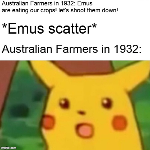 Great Emu War in a Nutshell | Australian Farmers in 1932: Emus are eating our crops! let's shoot them down! *Emus scatter* Australian Farmers in 1932: | image tagged in memes,surprised pikachu,funny,emu,australia,great emu war | made w/ Imgflip meme maker