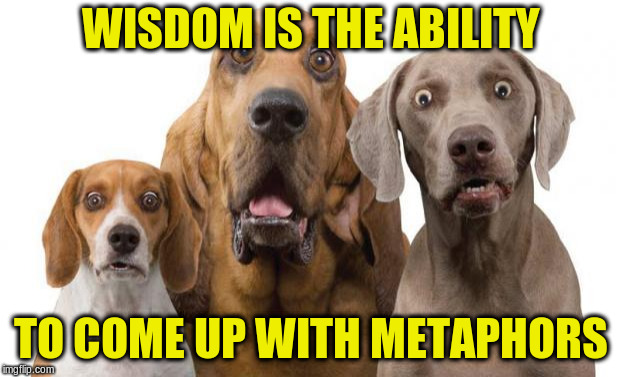 surprised dogs | WISDOM IS THE ABILITY TO COME UP WITH METAPHORS | image tagged in surprised dogs | made w/ Imgflip meme maker