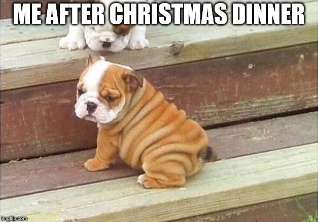 I ate too much doggy | ME AFTER CHRISTMAS DINNER | image tagged in dog,cute dog,christmas,thanksgiving dinner,fat,wtf | made w/ Imgflip meme maker