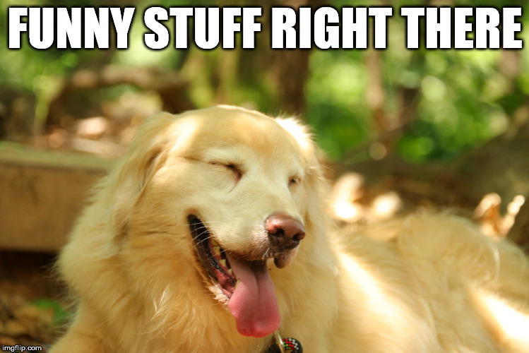 Dog laughing | FUNNY STUFF RIGHT THERE | image tagged in dog laughing | made w/ Imgflip meme maker