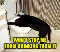 Dog toilet  | WON'T STOP ME FROM DRINKING FROM IT | image tagged in dog toilet | made w/ Imgflip meme maker