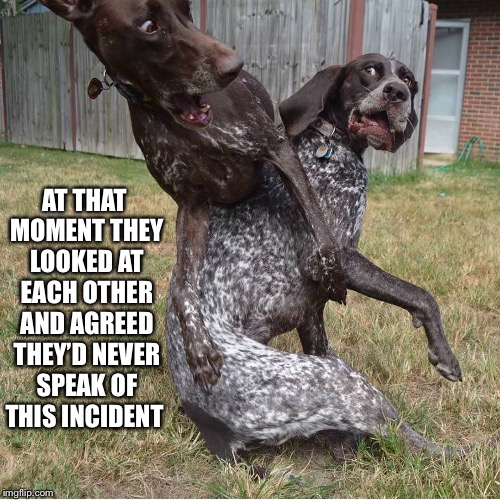 Bro-Dogs' Code of Silence... | AT THAT MOMENT THEY LOOKED AT EACH OTHER AND AGREED THEY'D NEVER SPEAK OF THIS INCIDENT | image tagged in dogs,collision,collide,never,speak,incident | made w/ Imgflip meme maker