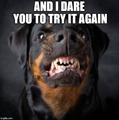 Rottweiler | AND I DARE YOU TO TRY IT AGAIN | image tagged in rottweiler | made w/ Imgflip meme maker