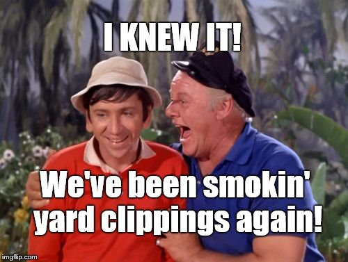 gilligan | I KNEW IT! We've been smokin' yard clippings again! | image tagged in gilligan | made w/ Imgflip meme maker