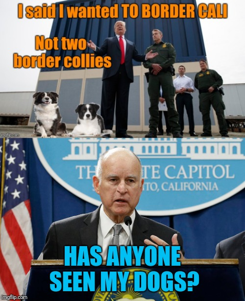 Intended As A Joke. Not A Political Stance. |  HAS ANYONE SEEN MY DOGS? | image tagged in border wall,border collie,donald trump,jerry brown,california | made w/ Imgflip meme maker