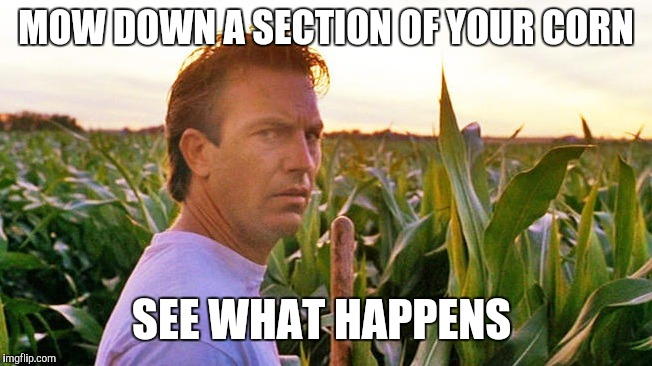 field of dreams | MOW DOWN A SECTION OF YOUR CORN SEE WHAT HAPPENS | image tagged in field of dreams | made w/ Imgflip meme maker