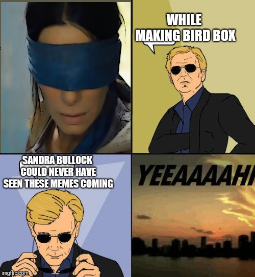 Horatio Insight | WHILE MAKING BIRD BOX SANDRA BULLOCK COULD NEVER HAVE SEEN THESE MEMES COMING | image tagged in funny,puns,bad puns | made w/ Imgflip meme maker