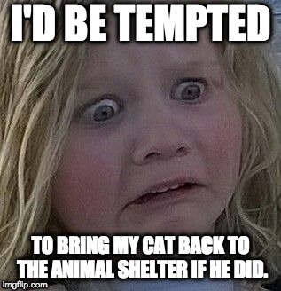 scared kid | I'D BE TEMPTED TO BRING MY CAT BACK TO THE ANIMAL SHELTER IF HE DID. | image tagged in scared kid | made w/ Imgflip meme maker