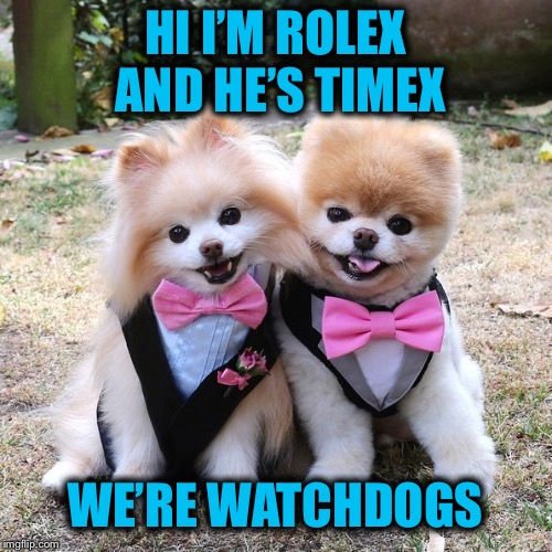 Cute Poms | HI I'M ROLEX AND HE'S TIMEX WE'RE WATCHDOGS | image tagged in watches,poms | made w/ Imgflip meme maker