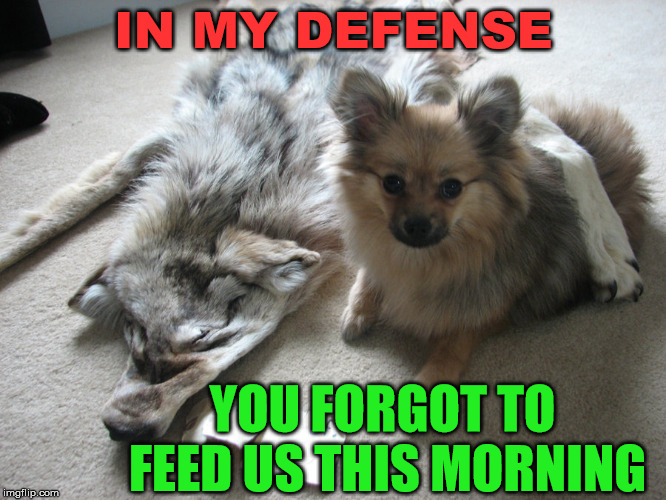 A little dog with a big appetite | IN MY DEFENSE YOU FORGOT TO FEED US THIS MORNING | image tagged in memes,dogs,hungry,humor,survival,eating | made w/ Imgflip meme maker