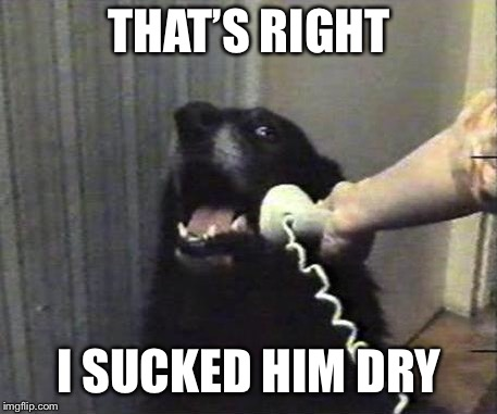 Yes this is dog | THAT'S RIGHT I SUCKED HIM DRY | image tagged in yes this is dog | made w/ Imgflip meme maker