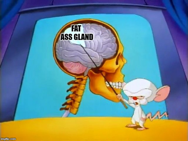 the brain | FAT ASS GLAND | image tagged in the brain | made w/ Imgflip meme maker