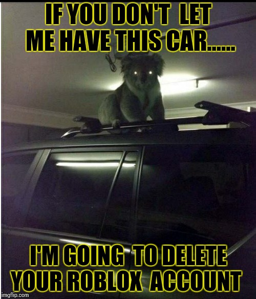 Creepy koala  | IF YOU DON'T  LET ME HAVE THIS CAR...... I'M GOING  TO DELETE YOUR ROBLOX  ACCOUNT | image tagged in creepy koala,koala,roblox,animals,funny memes | made w/ Imgflip meme maker
