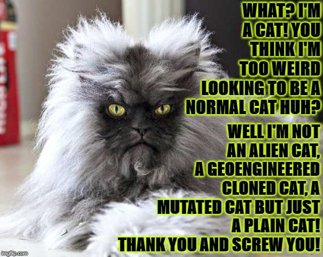WHAT? I'M A CAT! YOU THINK I'M TOO WEIRD LOOKING TO BE A NORMAL CAT HUH? WELL I'M NOT AN ALIEN CAT, A GEOENGINEERED CLONED CAT, A MUTATED CA | image tagged in what is it | made w/ Imgflip meme maker