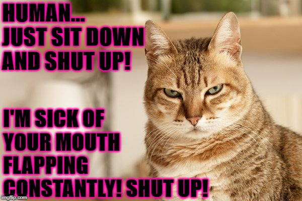 HUMAN... JUST SIT DOWN AND SHUT UP! I'M SICK OF YOUR MOUTH FLAPPING CONSTANTLY! SHUT UP! | image tagged in shut up | made w/ Imgflip meme maker