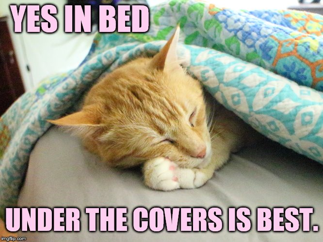 YES IN BED UNDER THE COVERS IS BEST. | made w/ Imgflip meme maker