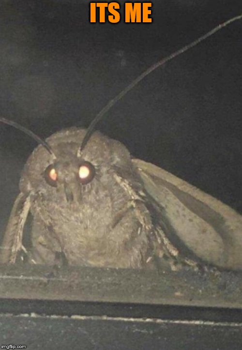 Moth | ITS ME | image tagged in moth | made w/ Imgflip meme maker