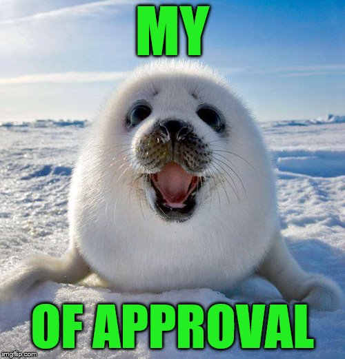 Happy New Years | MY OF APPROVAL | image tagged in cute seal,seal of approval,laughs,fun | made w/ Imgflip meme maker