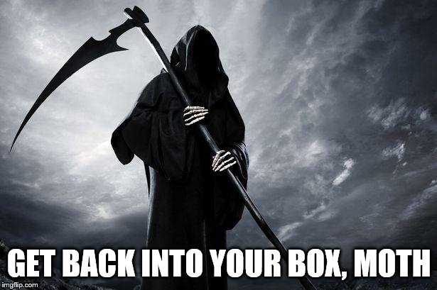 Grim Reaper | GET BACK INTO YOUR BOX, MOTH | image tagged in grim reaper | made w/ Imgflip meme maker