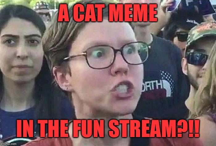 Triggered Liberal | A CAT MEME IN THE FUN STREAM?!! | image tagged in triggered liberal | made w/ Imgflip meme maker