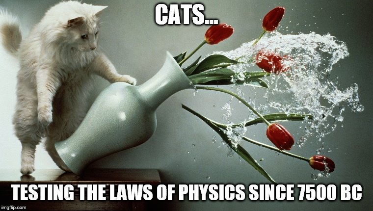 CATS... TESTING THE LAWS OF PHYSICS SINCE 7500 BC | image tagged in cats,physics,pets,mess | made w/ Imgflip meme maker