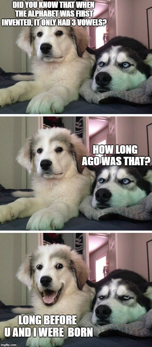 Bad pun dogs | DID YOU KNOW THAT WHEN THE ALPHABET WAS FIRST INVENTED, IT ONLY HAD 3 VOWELS? LONG BEFORE U AND I WERE  BORN HOW LONG AGO WAS THAT? | image tagged in bad pun dogs | made w/ Imgflip meme maker