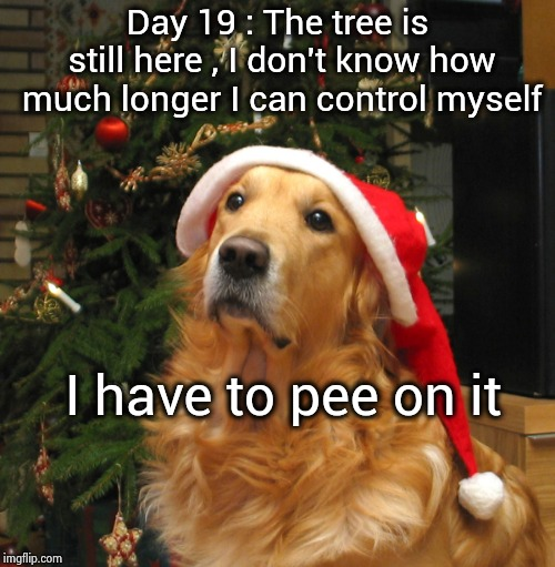 If your Dog kept a diary | Day 19 : The tree is still here , I don't know how much longer I can control myself I have to pee on it | image tagged in christmas tree,dog,check yourself before you wreck yourself,misunderstood | made w/ Imgflip meme maker