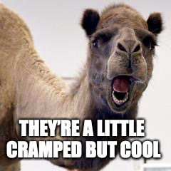 Camel | THEY'RE A LITTLE CRAMPED BUT COOL | image tagged in camel | made w/ Imgflip meme maker