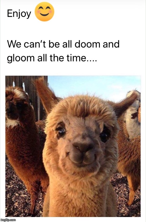 Smile | image tagged in alpaca,smiling,enjoy,doom,gloom,all the time | made w/ Imgflip meme maker
