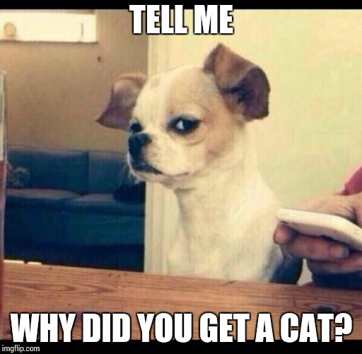 Mad dog |  TELL ME; WHY DID YOU GET A CAT? | image tagged in mad dog | made w/ Imgflip meme maker