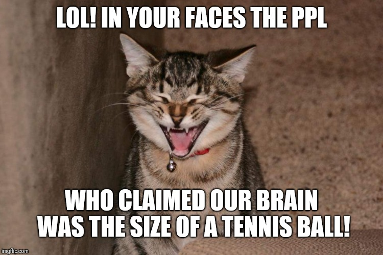 Lol cat | LOL! IN YOUR FACES THE PPL WHO CLAIMED OUR BRAIN WAS THE SIZE OF A TENNIS BALL! | image tagged in lol cat | made w/ Imgflip meme maker