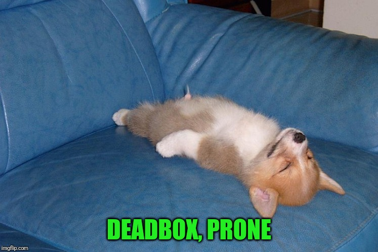 If you can't poke fun at yourself, you have no sense of humor | DEADBOX, PRONE | image tagged in corgi,dog,erection | made w/ Imgflip meme maker