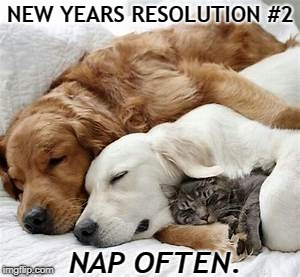 New Years Resolution pet | NEW YEARS RESOLUTION #2 NAP OFTEN. | image tagged in dogs,cats,new year,new years resolutions | made w/ Imgflip meme maker